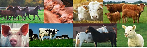Institut für Tierzucht und Tierhaltung
